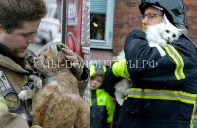 В Хабаровске планируют создать «горячую линию» для животных, попавших в беду