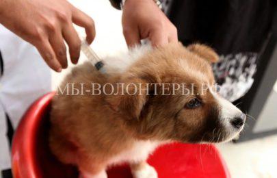 На территории Щербинки  установлен карантин из-за резкой вспышки бешенства домашних животных