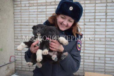 Полицейские в Абакане спасли щенков, брошенных в мешке на железнодорожных путях