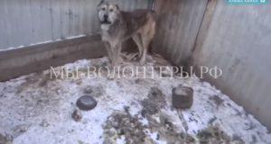 Жители Приамурья забрали собак из приюта