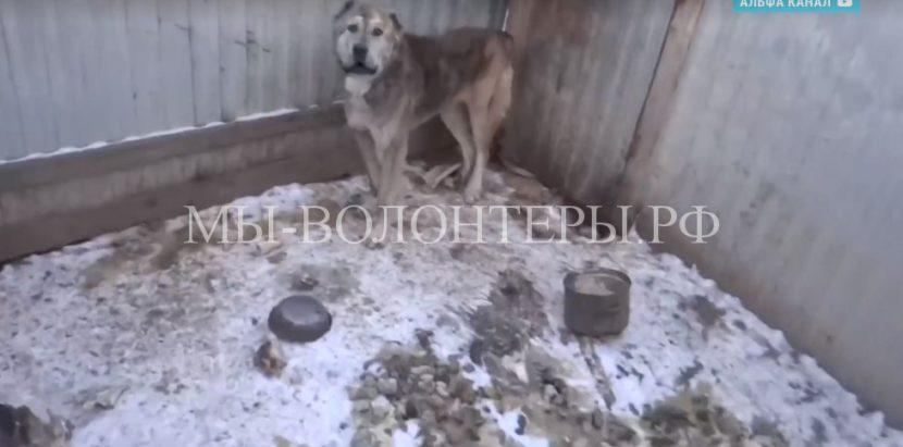 Жители Приамурья забрали собак из приюта «Дружок»,где ранее были обнаружены мертвые и голодные животные