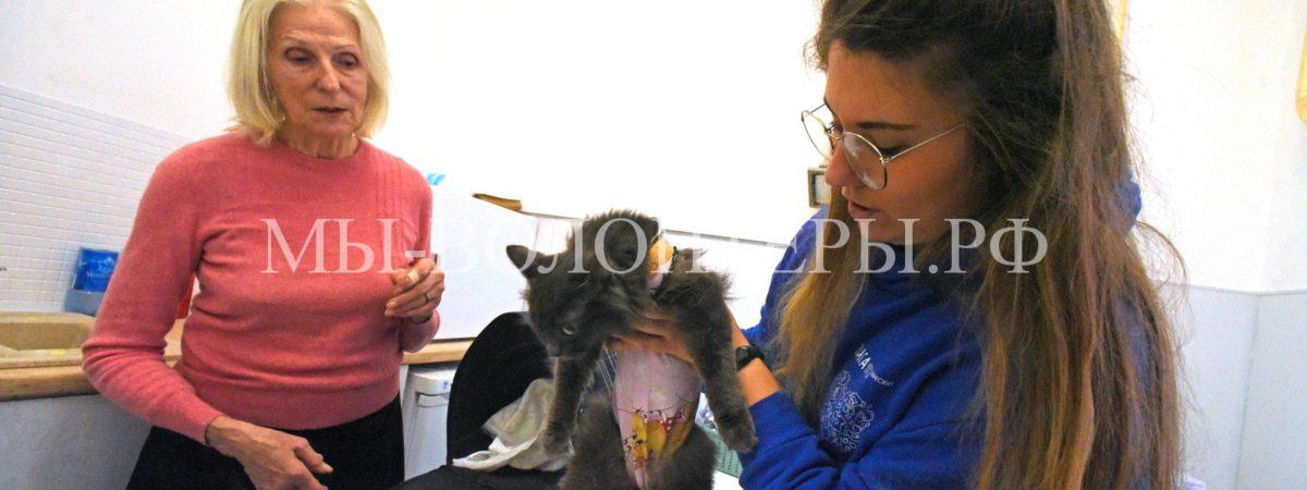 Первый бесплатный пункт стерилизации животных открылся в Москве