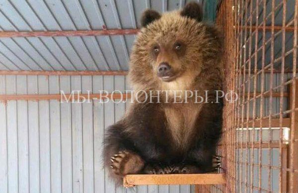 Медвежонок Машка, семью которого убили браконьеры, будет жить вцентре реабилитации диких животных