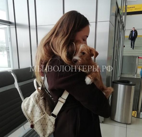 Студентка из Екатеринбурга спасла щенка, который чуть не стал обедом китайца