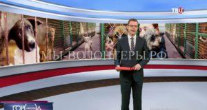 На телеканале ТВЦ вышел репортаж о приюте ЮЗАО