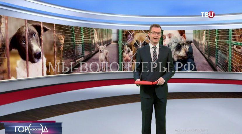 На телеканале ТВЦ вышел репортаж о приюте ЮЗАО «Щербинка»