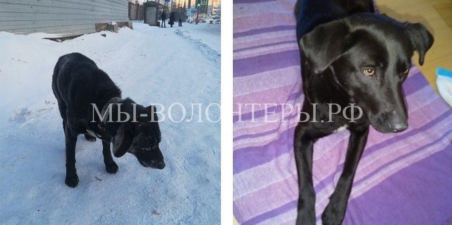 Собака,брошенная хозяином, в -40 неделю ждала его на автобусной остановке
