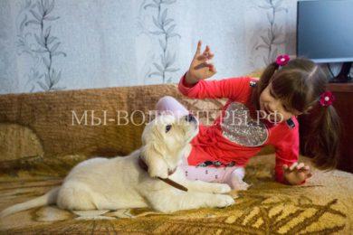 Девочка-аутист из Приморья получила от Президента РФ в подарок щенка