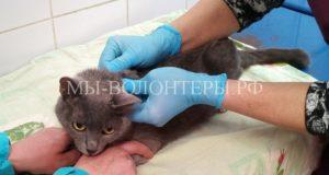 Замерзающая беременная кошка пришла к собакам, которые ее приютили, грели и кормили