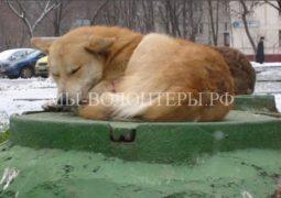 Минприроды предлагает распределить полномочия по контролю за обращением с животными