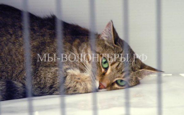 Первый отдельный приют для кошек предлагают создать в Москве
