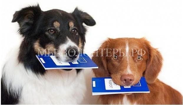 В феврале законодатели планируют обсудить вопросы регистрации и учета домашних животных