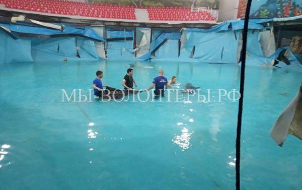 В Алуште спасли дельфинов после разгерметизации бассейна дельфинария