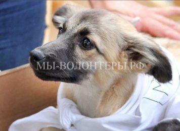3 марта в парке «Сокольники» пройдет фестиваль в поддержку бездомных животных