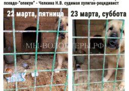 22-23 марта, консервы с рваными краями в вольере алабая БАЛУ - псевдо