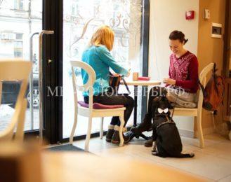 В кафе создали специальное угощение питомцев посетителей