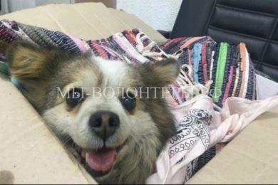Девушка-волонтер бросилась в поток машин, чтобы спасти маленькую собачку на автостраде