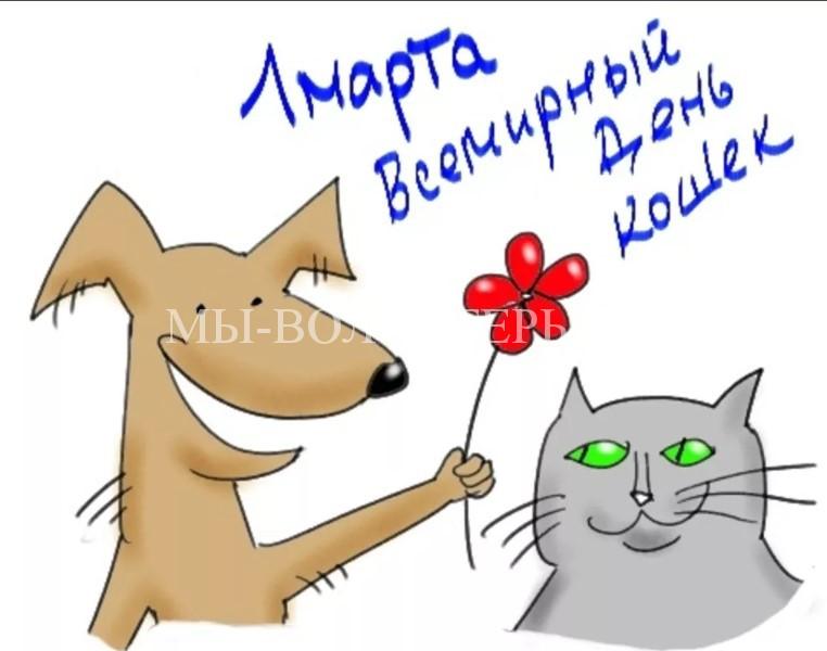 1 марта отмечается Международный день кошек