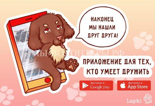 Новороссийские программисты разработали мобильное приложение для поиска потерявшихся животных