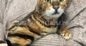 Спасение кота Бонифация, попавшего с хозяевами в страшную аварию