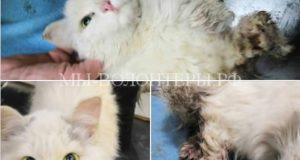 Спасение котенка, проехавшего 100 километров под капотом авто