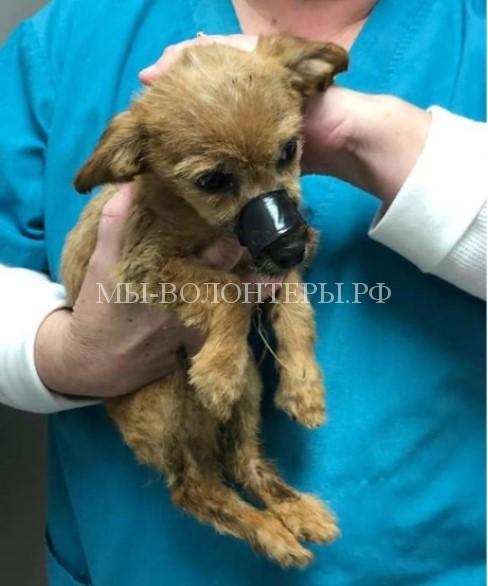 Лишь счастливая случайность спасла жизнь этому щенку