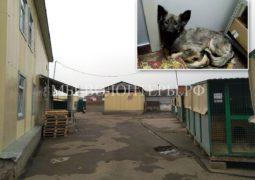 Вопрос  А.И.Потопалову и Л.Б.Федотовой: Челкина незаконно вывезла щенка Марселя из приюта Щербинка?