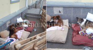 Будни ветблока приюта Щербинка: наши неходячие инвалиды Нильс и Степушка