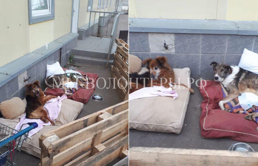 Будни ветблока приюта Щербинка: наши неходячие инвалиды Нильс и Степушка «гуляют»