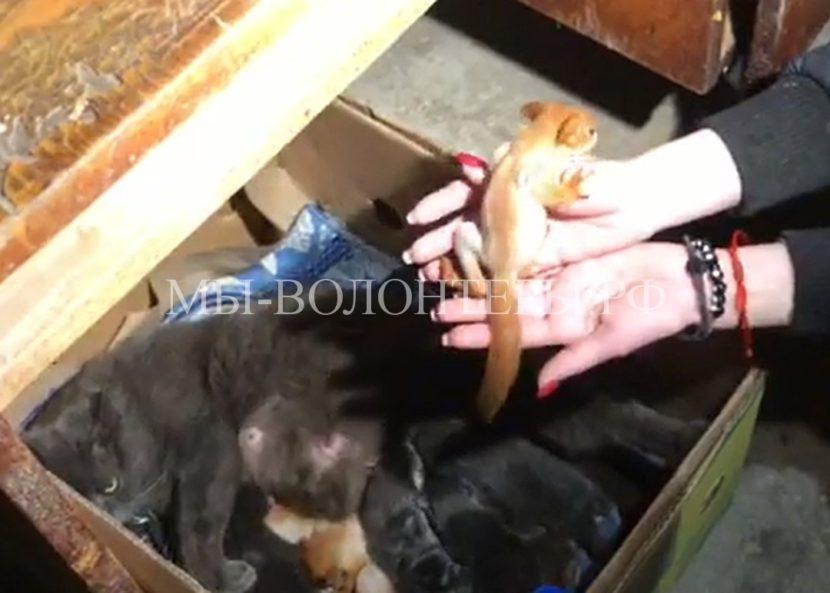 Кошка заменила маму новорожденным бельчатам-сиротам