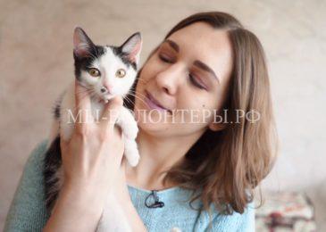 Проект «Передержка: поддержи друга жильём»для решения проблемы бездомных животныхв Чите