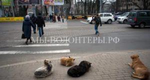 В Калининградской области бездомными животными займется новое государственное учреждение - Центр для безнадзорных животных