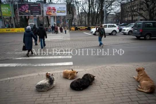 В Калининградской области бездомными животными займется новое государственное учреждение — Центр для безнадзорных животных