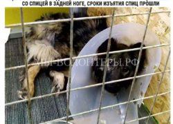 Волонтеры призвали А.И.Потопалова и Л.Б.Федотову (ГБУ Автодор ЮЗАО) помочь и защитить щенка Марселя от Челкиной. Успешно.