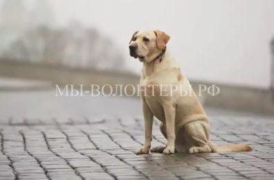 «Яндекс» открыл сервис для поиска пропавших животных