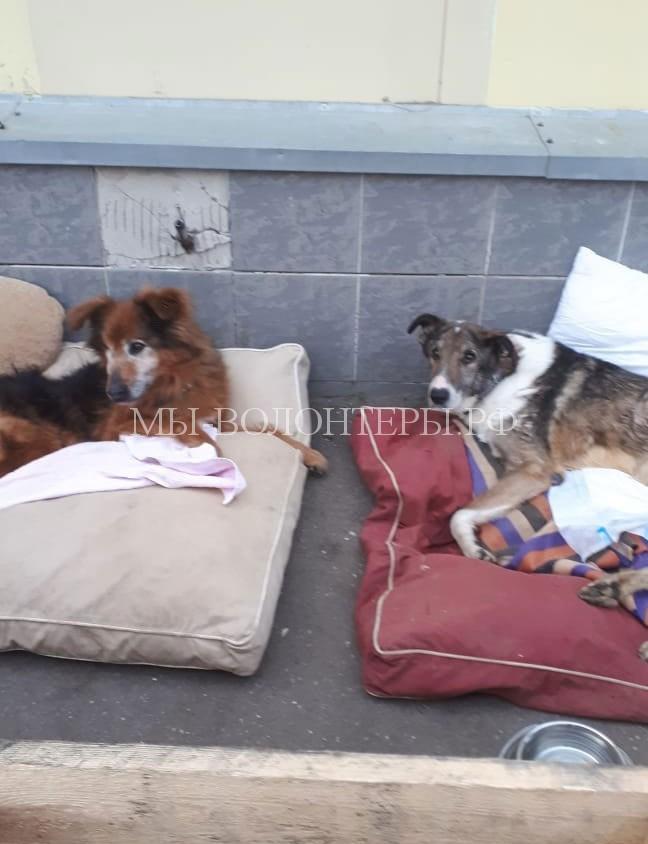 Выгул собак инвалидов Нильс и Дик, приют Щербинка