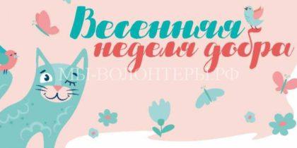Результат фестиваля «Пасхальный дар» — приютили около 50 собак и 100 кошек