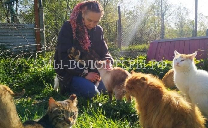 Три года назад жительница Калининграда решила открыть приют «Дом одиноких кошек».