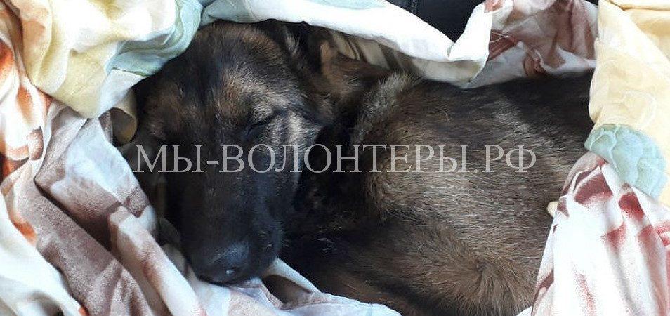 В Ярославской области сотрудники ДПС помогли сбитой собаке