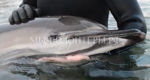 В Севастополе волонтеры спасли дельфина, запутавшегося в сетях