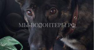 Жители Рязани спасли собаку, пострадавшую от человеческой жестокости