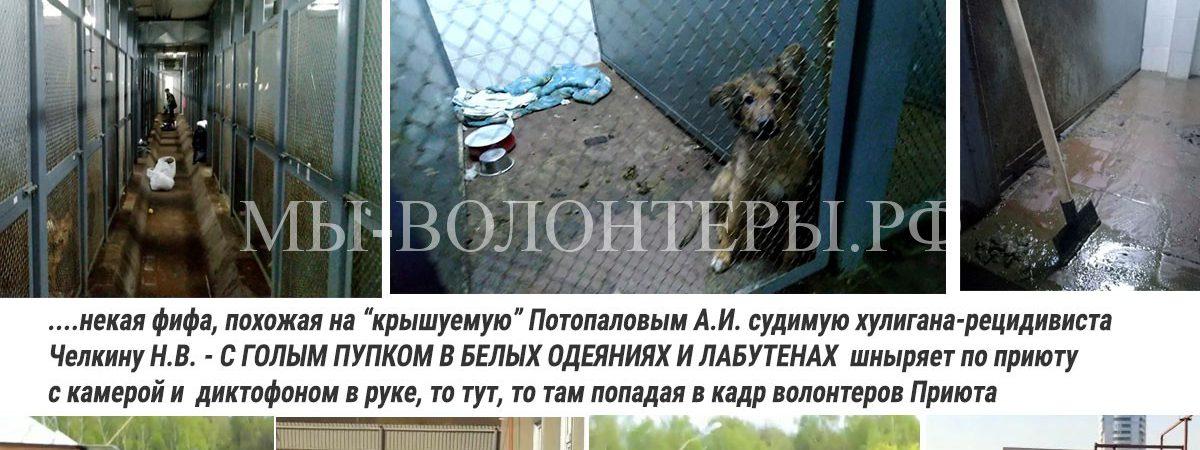 Пока волонтеры спасают собак, похожая на Челкину фифа с «голым пупком и в белых одеждах» шныряет по приюту с камерой