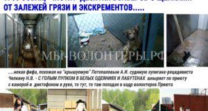 Пока волонтеры спасают собак, похожая на Челкину фифа с