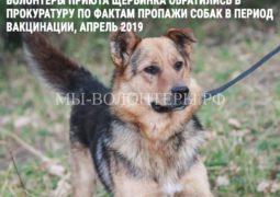 В Прокуратуру по фактам пропажи собак обратились волонтеры приюта ЮЗАО