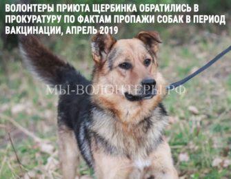 В Прокуратуру по фактам пропажи собак обратились волонтеры приюта ЮЗАО  «Щербинка»