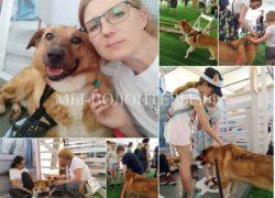 Фестиваль «4 Лапы» в Сокольниках, репортаж участника, волонтера Аллы Булычевой, её подопечным улыбнулась удача