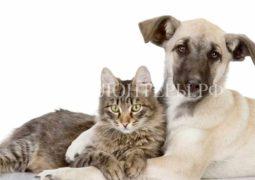 В России не будет реализованаинициатива об ограничении количества домашних животных