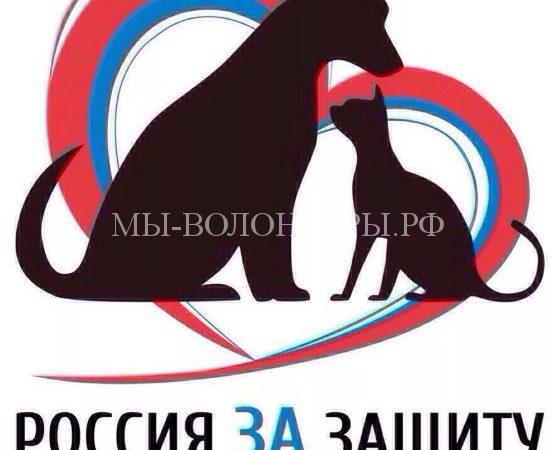До вступления в силу закона «Об ответственном обращении с животными» осталось полгода