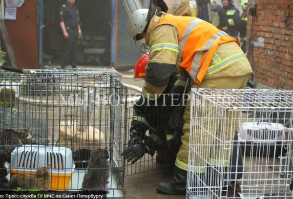 Из горящего приюта пожарные спасли 300 кошек и семь собак