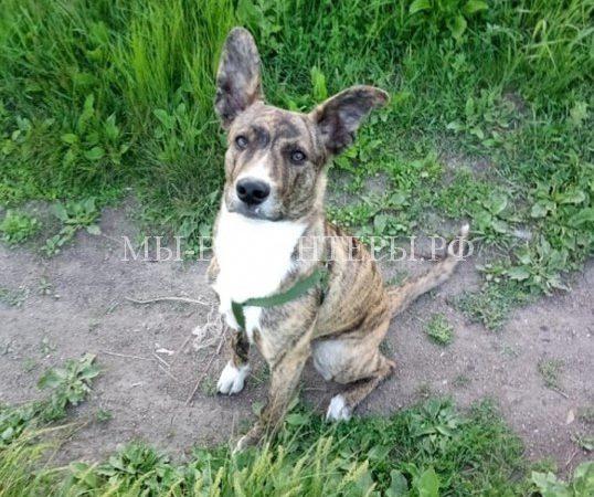 Полицейские Уссурийска спасли щенка и нашли ему дом